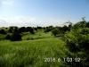 17 Pasture view