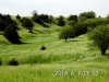 18 Pasture view