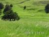 19 Pasture view