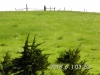 20 Pasture view SW corner