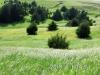 22 Pasture view