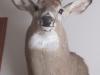 15 Deer Mount