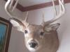16 Deer Mount
