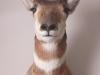 18 Antelope Mount