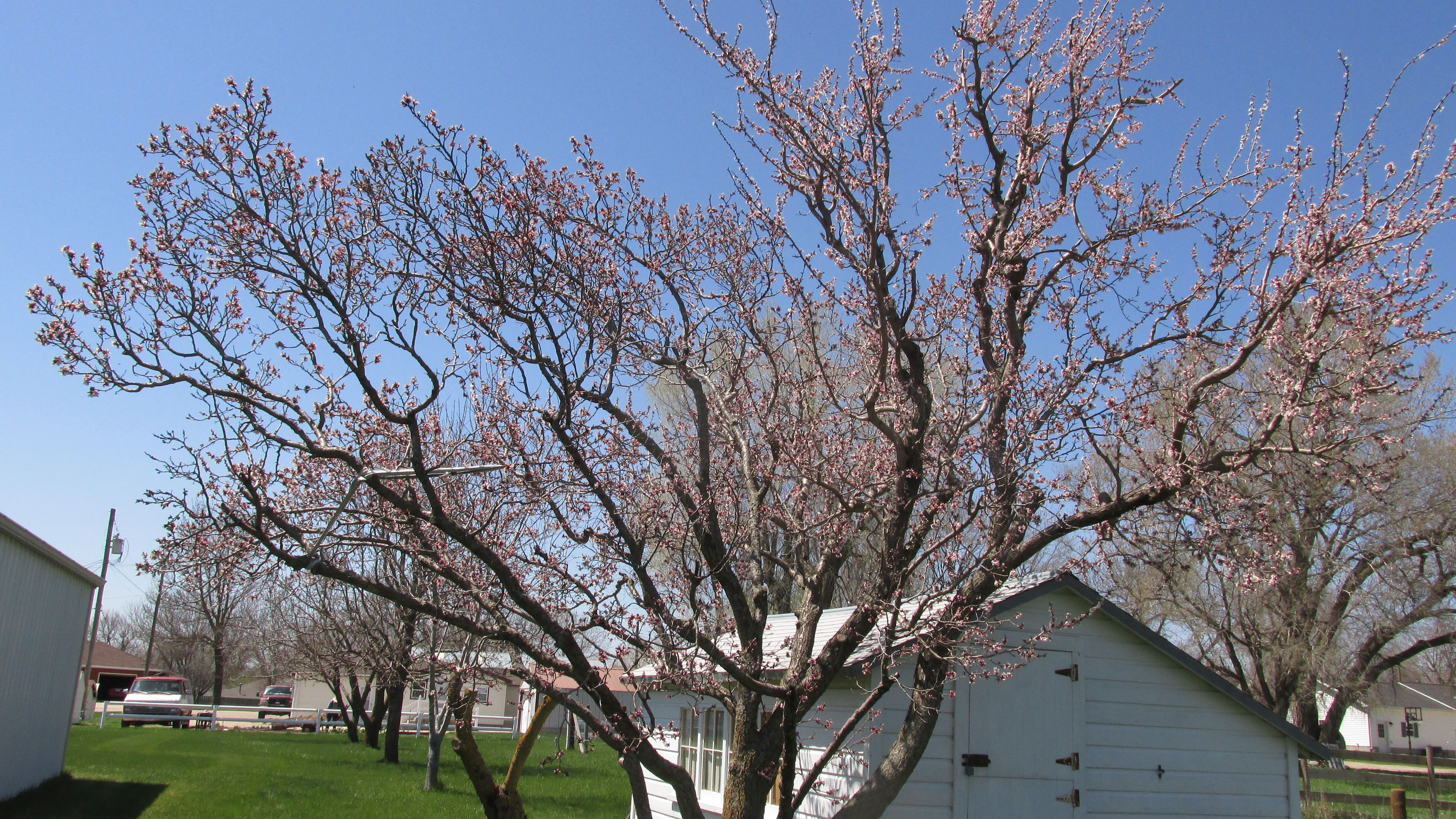 One of several fruit trees